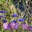 De laatste bloemen bloeien nog (9)