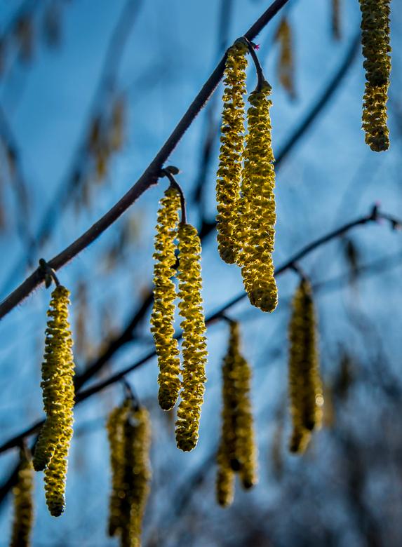 Voorjaar - Voorjaar.........tegen het zonlicht in