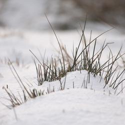 Mijn laatste sneeuw ....(voorlopig..)