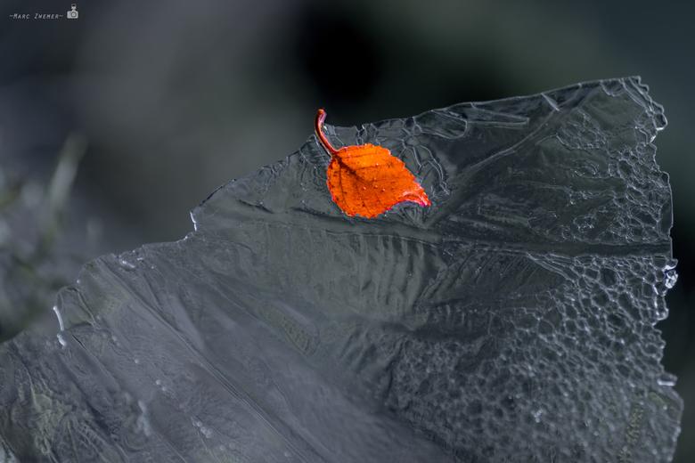 Oranje_blad_in_ijs_v2