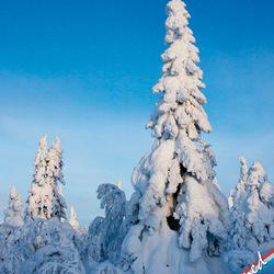 Winterlandschap in fins Lapland
