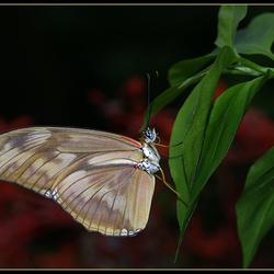 Hanging on a leaf!