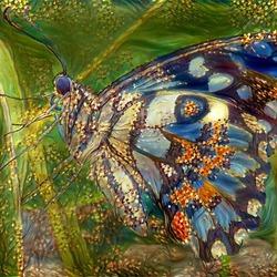 Vlinder filterwerk