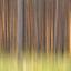 Abstract dennenbos