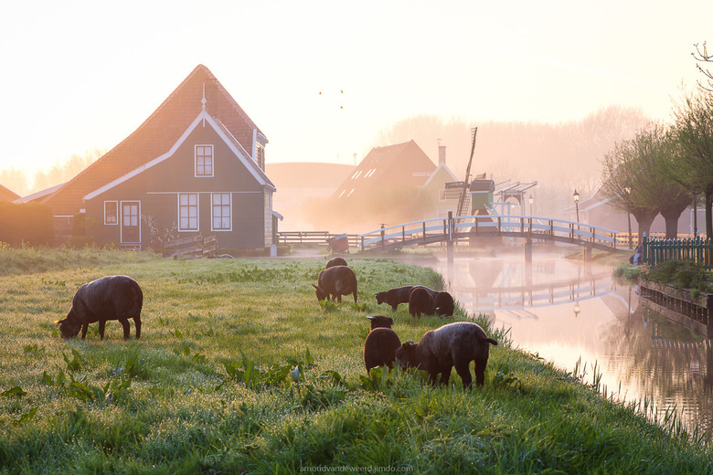 Spring at the Zaanse Schans