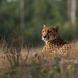 Op safarie