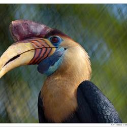 De aandachtsvogel (jaarvogel)