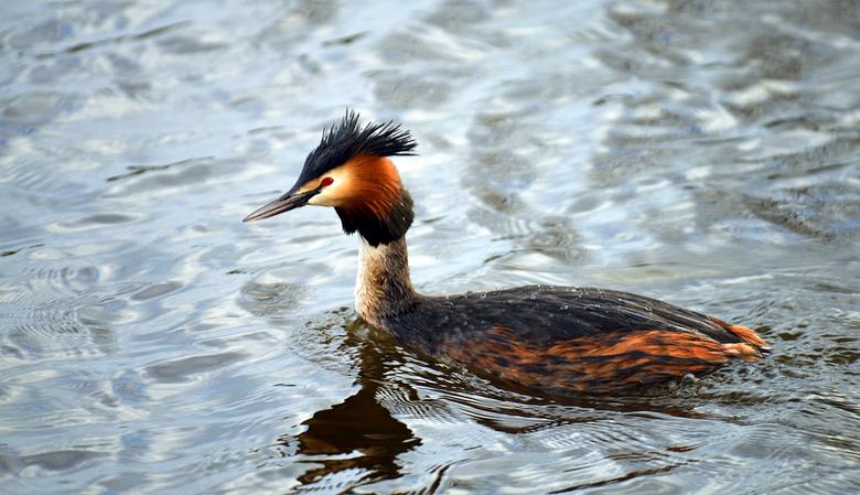 Beauty - Wat een mooie vogels zijn het toch.<br /> Groet, Djurre