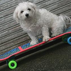 bubbels op skateboard