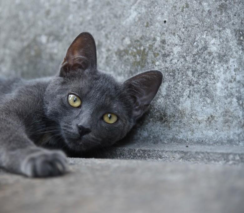 wereld kattendag - Het is kattendag vandaag, een mooie gelegenheid om een foto van de kat van de buren te plaatsen.