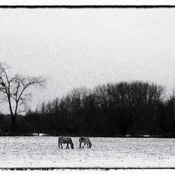 Wild horses......