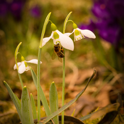 bloemetjes en bijtje