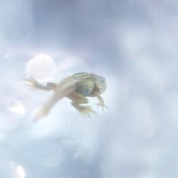 froggy dream