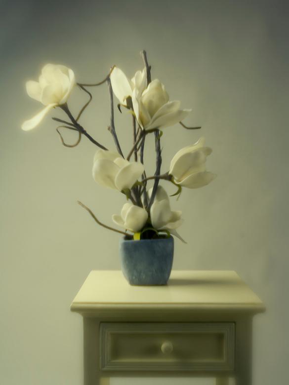 witte-bloemen in pot-AEP - Gemaakt met softfocus filter; even terug in de tijd.....