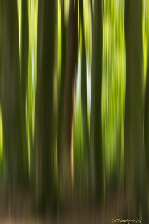"""Bomen impressie  - Met de ICM techniek gemaakt. Vind hier het spel van licht en donker mooi maar begrijp dat die niet iedereen zijn """"cup of tea&q"""