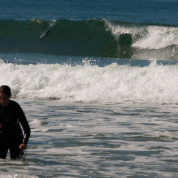 hector dolfijn geeft surfles.