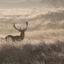 Hert in een mooi winters landschap
