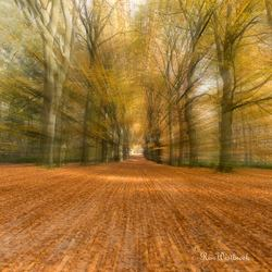 Moving forest