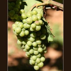 Bourgognedruif