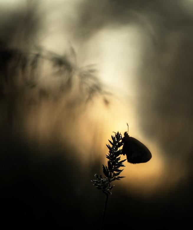 When the day breaks - Als de dag aanbreekt ontstaan vaak de mooiste momenten. Dank voor jullie reactie's op 'There are strange creatures in