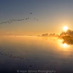Vroege vogels in de ochtendmist