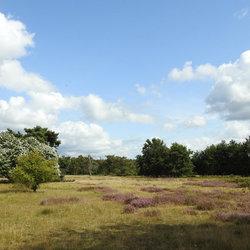 De Groote Heide.