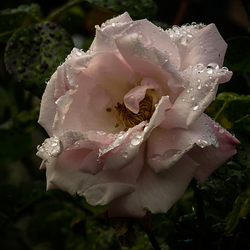 Na regen...