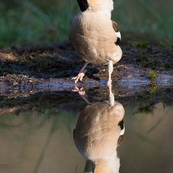 spiegeltje spiegeltje!