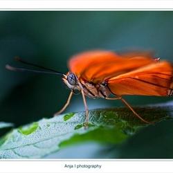 Vlinders gespot 3