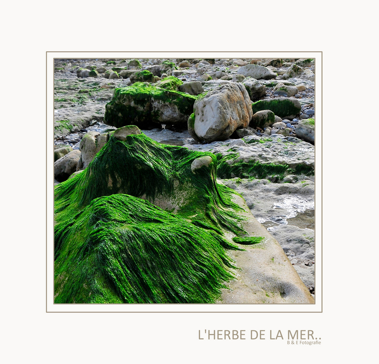 L'Herbe De La Mer.. - Goedenavond allemaal, bedankt voor jullie reacties op onze vorige up-load. Deze keer een detailopname van de rotsstranden, iets