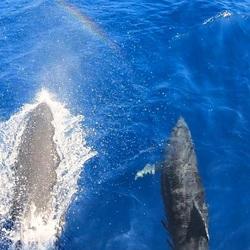Dolfijnen bij Benalmadena