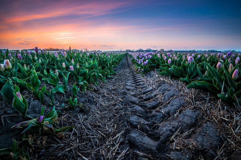"Tulpensporen - Ook lente in je Bol?<br /> Mocht je inspiratie willen check mijn blog: <a href=""http://www.martijnvandernat.nl/always-have-a-backup-pl"