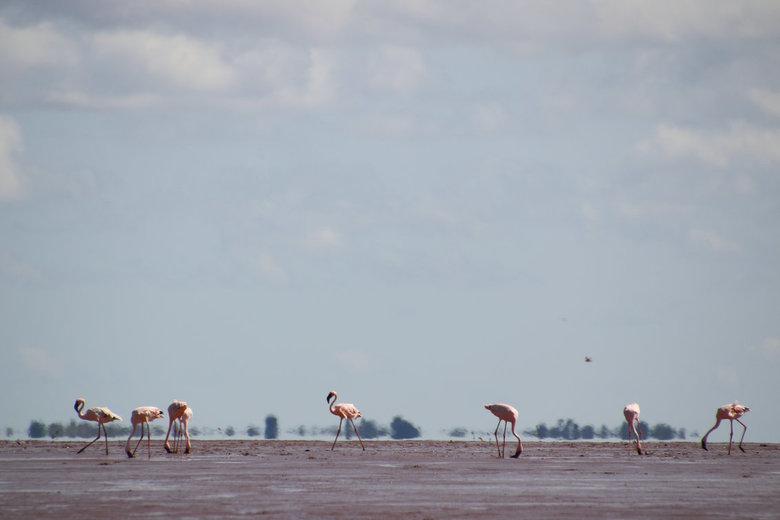 Betsiboka delta - Droogvallende modderplaten in de Betsiboka delta, Madagaskar