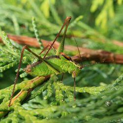 Japie in het groen