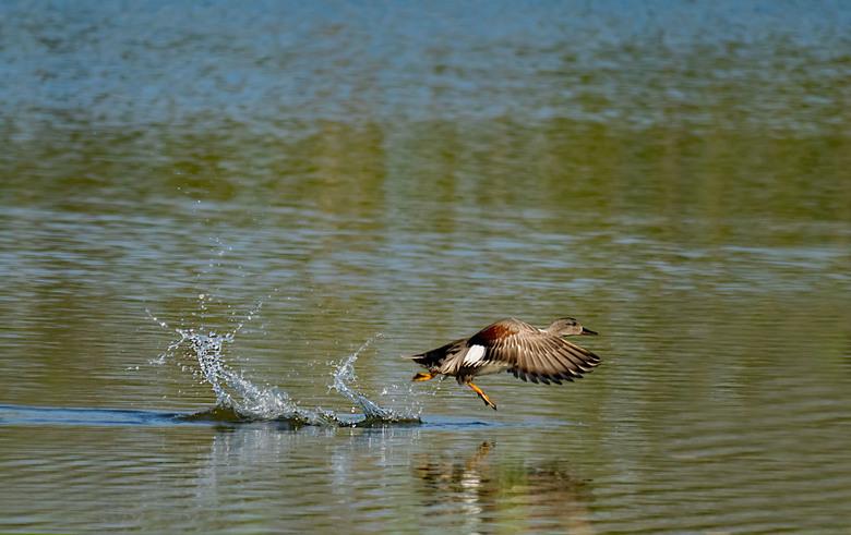 snelle start   - Vond in het Spaarnwoudegebied een heerlijk stekkie voor onthaasten met veel water riet en vogels