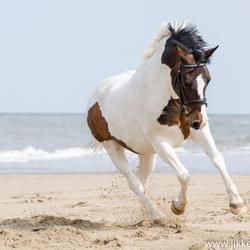 Pony op het strand
