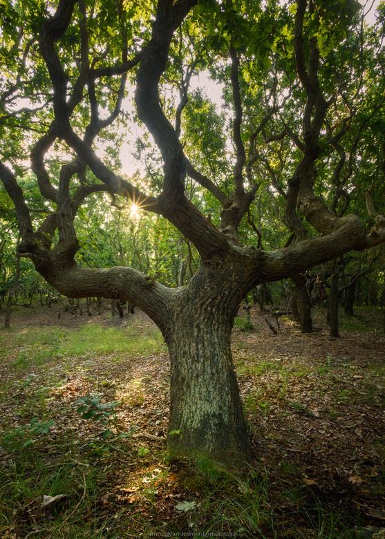 Winding Oak - Fotografie in het bos blijft een uitdagende tak van sport. Doordat er zoveel structuren zijn, kan een foto al vrij snel chaotisch worden