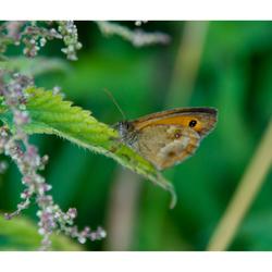 Nature Art 2011 - 19