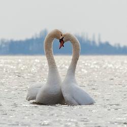 Echte liefde, onverwoestbaar
