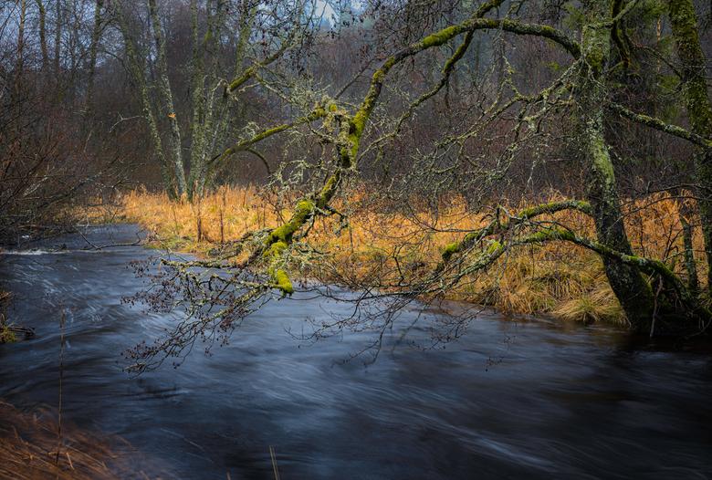 With the flow - Ondanks de vele regen ben ik er toch op uit getrokken. Doordat het complete landschap doorweekt was (incl. ikzelf en de camera) kwamen