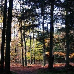 Kleur in bos