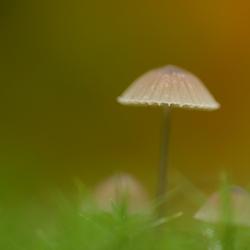 paddenstoel in het mos