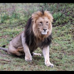 Koning der dieren