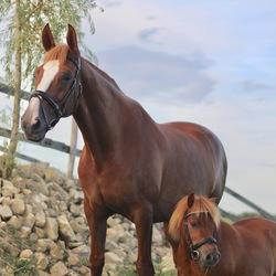 Het paardjes duo Loes en Daantje