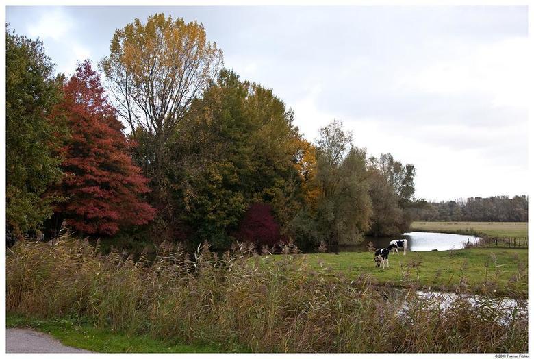Biesbos - Afgelopen zondag ff wezen wandelen in de Biesbos. Erg mooi om de omgeving in de herfst te zien veranderen. Het verschil in kleuren en ook in