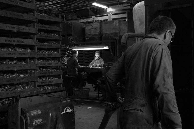 Bollen leven  - Een jaar lang heb ik het bollenbedrijf van mijn ouders gefotografeerd. Een echt familiebedrijf, over van vader op zoon. Ook mijn broer
