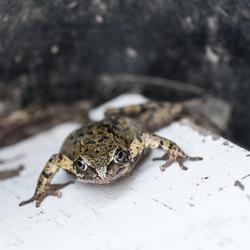 Een kikker op de tuintafel