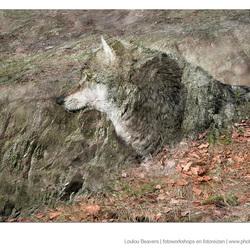 Wolf als kunst?