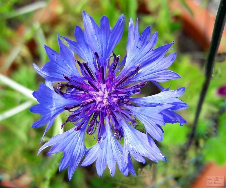 glorie blue2018-06-23 -