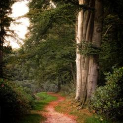 Walk the lane...
